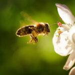 Biodiversität &Umwelt