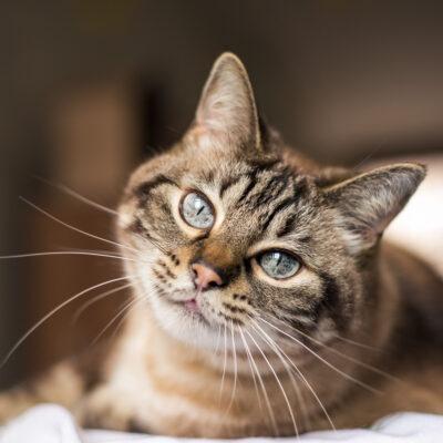 Wie werde ich die Katzenlos?