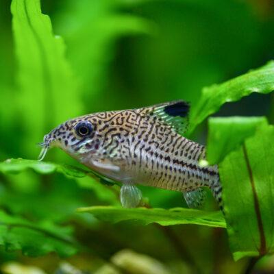 Aquarium ausgelaufen – wer bezahlt?