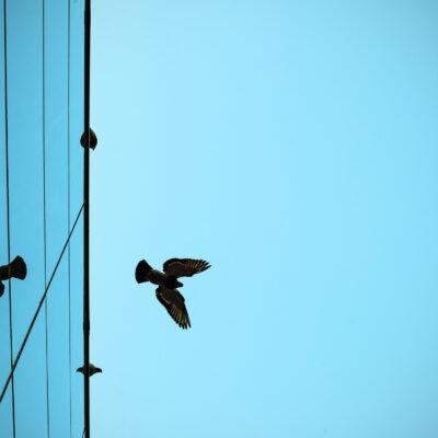 Vögel und Glas – ein Problem von unterschätzter Dimension