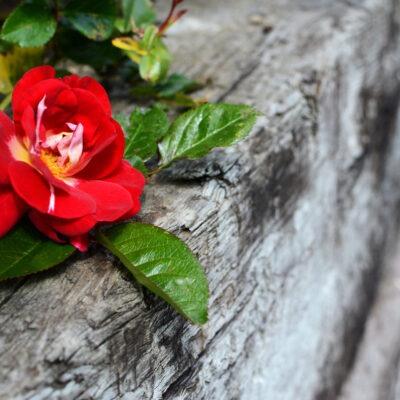 Garten-Idylle auf dem Holzweg