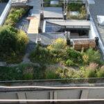 Grüne Oasen auf dem Dach