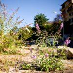 Neophyten im Garten