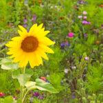 Ja zu Biodiversität und Landschaftsschutz: Casafair unterstützt Doppelinitiative